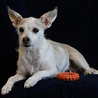 Terrier (Unknown Type, Medium) Mix Dog for adoption in Phelan, California - Millie