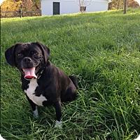 Adopt A Pet :: Emi - Cumberland, MD