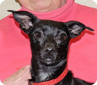 Terrier (Unknown Type, Small) Mix Dog for adoption in Spokane, Washington - Minnie