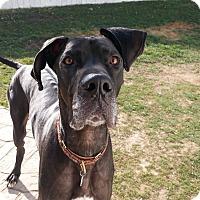 Adopt A Pet :: Ranger - Manassas, VA