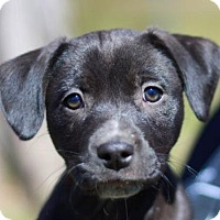 Adopt A Pet :: Lucinda - Brattleboro, VT