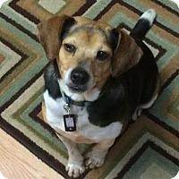 Adopt A Pet :: Piper - Brooklyn Center, MN