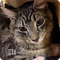 Adopt A Pet :: Eli - Foothill Ranch, CA