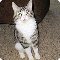 Adopt A Pet :: Esther - Lexington, KY