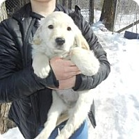 Adopt A Pet :: Gordie ADOPTED!! - Antioch, IL