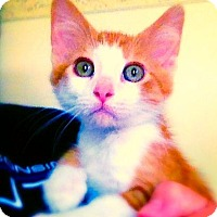 Adopt A Pet :: Fox - Green Bay, WI