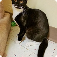Adopt A Pet :: Dolly - East Meadow, NY
