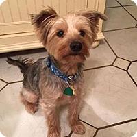 Adopt A Pet :: Mason - Sinking Spring, PA
