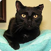 Adopt A Pet :: Behr - Milford, MA