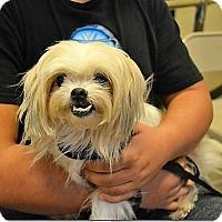 Adopt A Pet :: Pookie - Tavares, FL