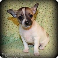 Adopt A Pet :: Alvin - Lodi, CA