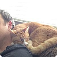 Adopt A Pet :: Daxter - El Dorado Hills, CA