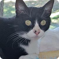 Adopt A Pet :: Josie - Georgetown, TX