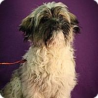 Adopt A Pet :: Hugo - Broomfield, CO