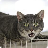 Adopt A Pet :: Tito - East Smithfield, PA