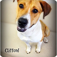 Adopt A Pet :: Clifford - Pascagoula, MS