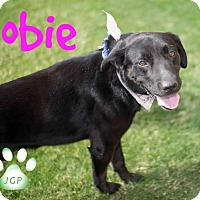 Adopt A Pet :: Kobie, the rain dancer - Scottsdale, AZ