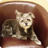 Adopt A Pet :: Goggie - Pocahontas, AR