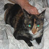 Adopt A Pet :: Louise - Pensacola, FL