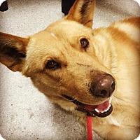 Adopt A Pet :: Bruce - Saskatoon, SK