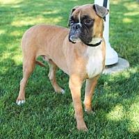 Adopt A Pet :: Linc - Alameda, CA