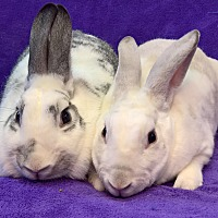 Other/Unknown Mix for adoption in Lewisville, Texas - Penelope and Marshmallow