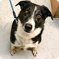 Adopt A Pet :: MEG - Chico, CA