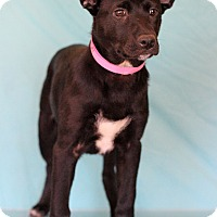 Adopt A Pet :: Corporal - Waldorf, MD
