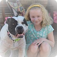 Adopt A Pet :: SHERMAN - Knoxville, TN
