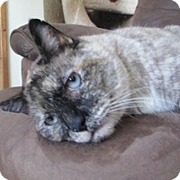 Adopt A Pet :: 'Stayshia' Young Deaf - Special Needs - HILLSBORO, OR