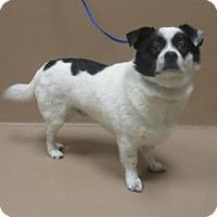 Adopt A Pet :: Yako - Reno, NV