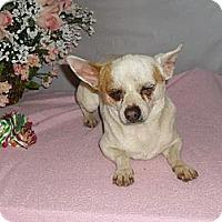 Adopt A Pet :: Tiny Tim - Chandlersville, OH