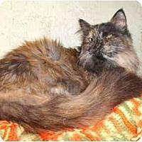 Adopt A Pet :: TIA - Morris, PA