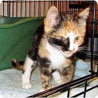 Adopt A Pet :: Darcy - Colmar, PA