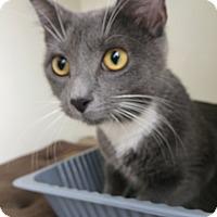 Adopt A Pet :: Katy - West Lafayette, IN