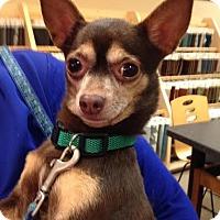 Adopt A Pet :: Hershey - Baton Rouge, LA