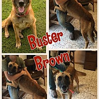 Adopt A Pet :: Buster Brown - Ravenna, TX