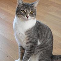 Adopt A Pet :: Weldin - Palo Cedro, CA