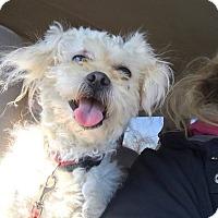 Adopt A Pet :: Sherman - Canton, OH