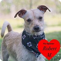 Adopt A Pet :: Jack - San Leon, TX