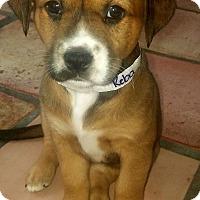 Adopt A Pet :: Reba - Ft. Lauderdale, FL