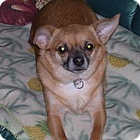 Adopt A Pet :: Gizmo - Laingsburg, MI