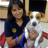 Adopt A Pet :: Wishbone - Fowler, CA