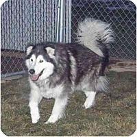Adopt A Pet :: B.B. King - Meridian, ID