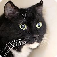 Adopt A Pet :: Stieglitz - Chicago, IL