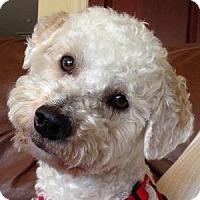 Adopt A Pet :: Cruzer - La Costa, CA