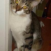 Adopt A Pet :: Strummer - Cerritos, CA