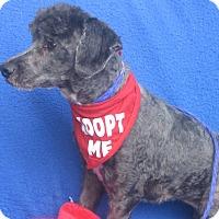 Adopt A Pet :: Oreo-WATCH MY VIDEO!!!! - Irvine, CA