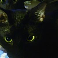 Adopt A Pet :: Cerise - Centerton, AR
