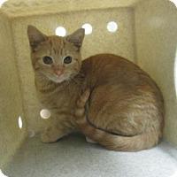Adopt A Pet :: FERAL LASSO - Reno, NV